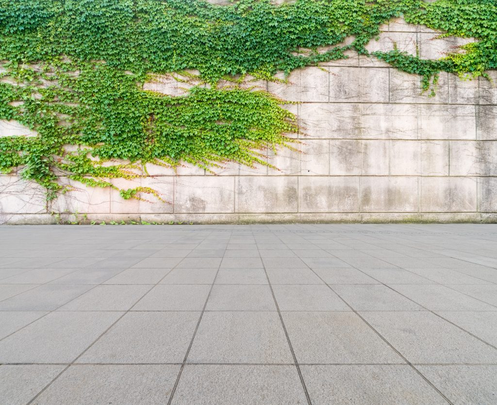 green ivy on wall with concrete floor as background